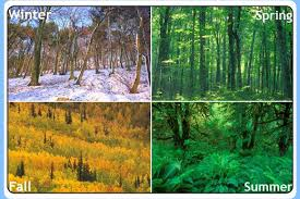 Climatic zones eduprimary 4 seasons temperate frigid zone altavistaventures Image collections